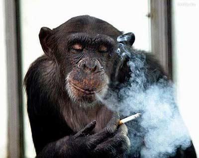 так выглядят курильщики со стороны некурящих