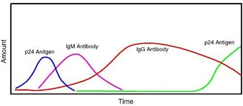 антитела к ВИЧ