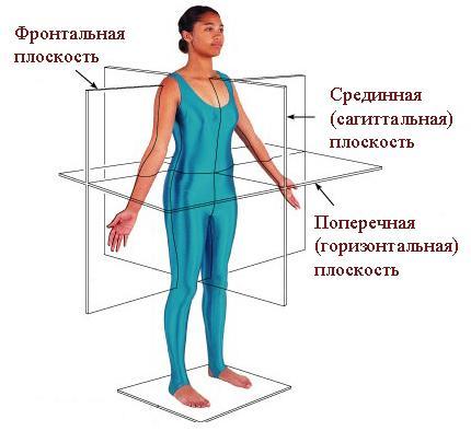 плоскости человеческого тела