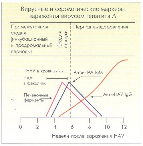 Фокальная нодулярная гиперплазия печени лечение народными средствами