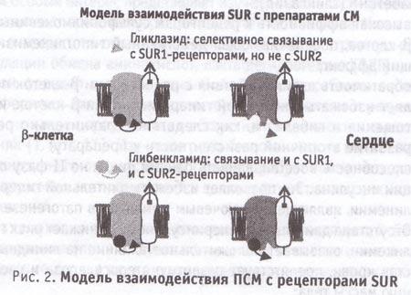 Модель взаимодействия препаратов сльфонилмочевины вместе с рецепторами SUR