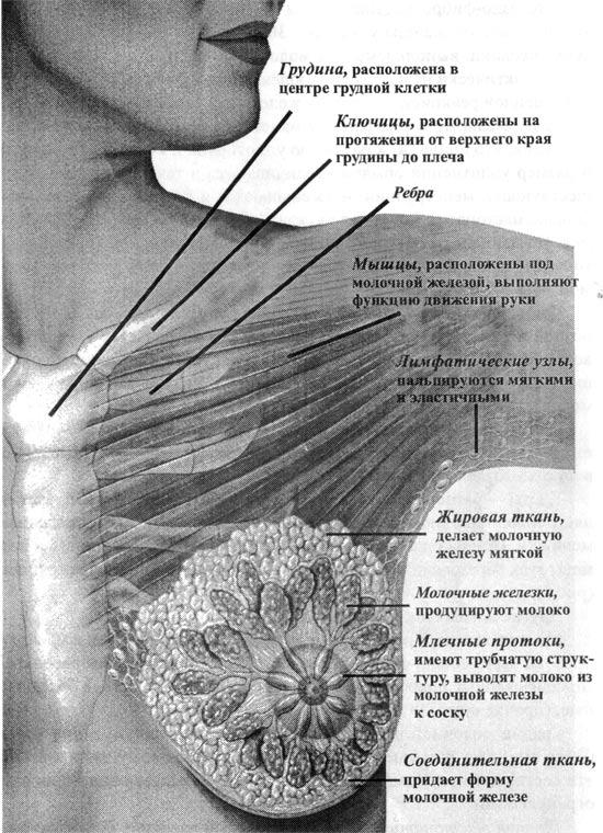 Железа Молочная фото