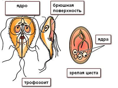 как паразиты выходят из организма после лечения