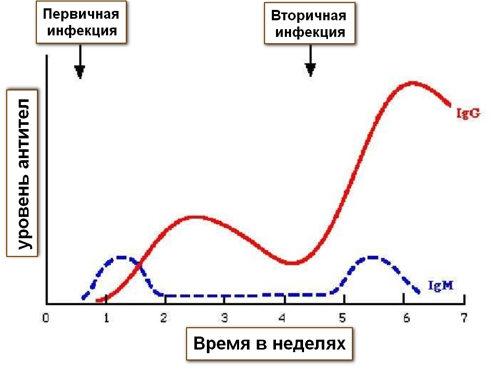 динамика антител при инфекции