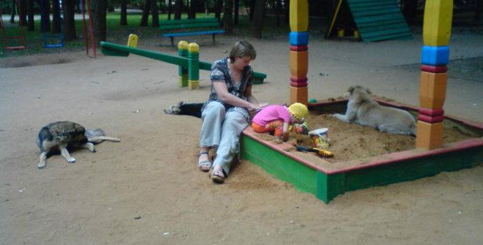 собаки в детской песочнице