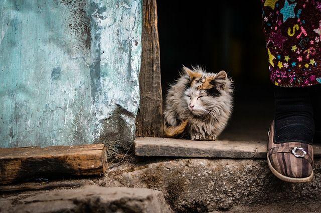 кот, бедность